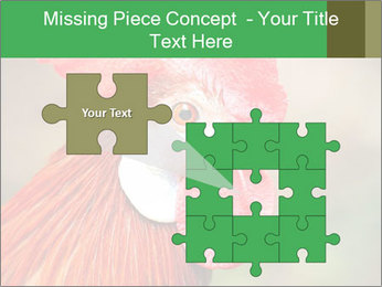 Red Rooster PowerPoint Template - Slide 45