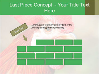 Red Rooster PowerPoint Template - Slide 46