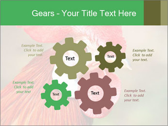 Red Rooster PowerPoint Template - Slide 47