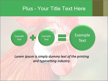 Red Rooster PowerPoint Template - Slide 75
