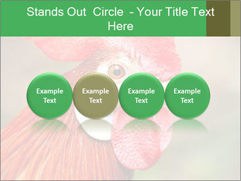 Red Rooster PowerPoint Template - Slide 76