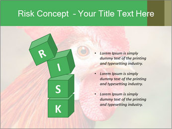 Red Rooster PowerPoint Template - Slide 81