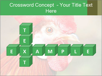 Red Rooster PowerPoint Template - Slide 82