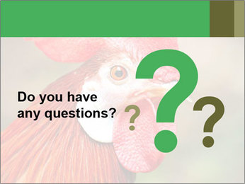 Red Rooster PowerPoint Template - Slide 96