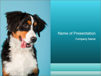Berner sennen dog PowerPoint Template