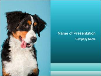 Berner sennen dog PowerPoint Template - Slide 1
