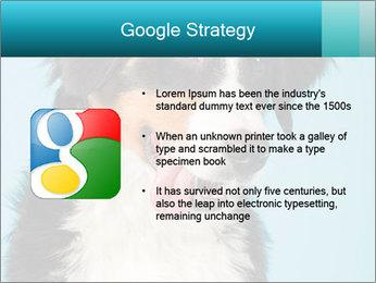 Berner sennen dog PowerPoint Template - Slide 10