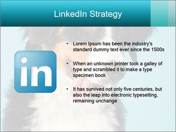 Berner sennen dog PowerPoint Template - Slide 12