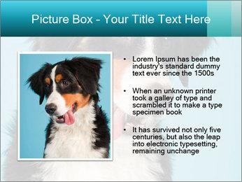 Berner sennen dog PowerPoint Template - Slide 13