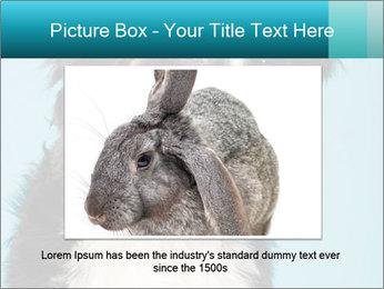 Berner sennen dog PowerPoint Template - Slide 16