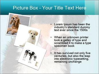 Berner sennen dog PowerPoint Template - Slide 17