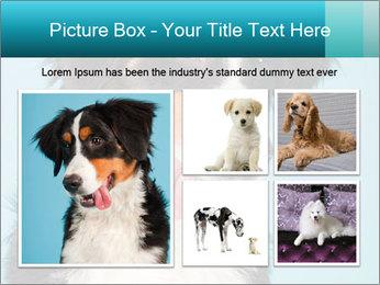 Berner sennen dog PowerPoint Template - Slide 19