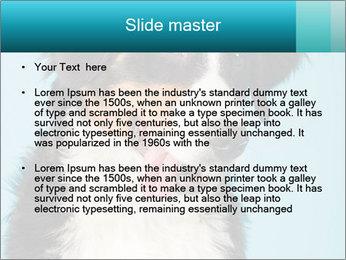 Berner sennen dog PowerPoint Template - Slide 2