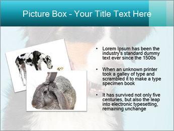 Berner sennen dog PowerPoint Template - Slide 20