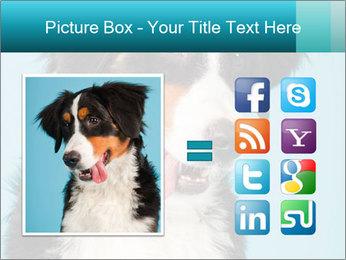 Berner sennen dog PowerPoint Template - Slide 21