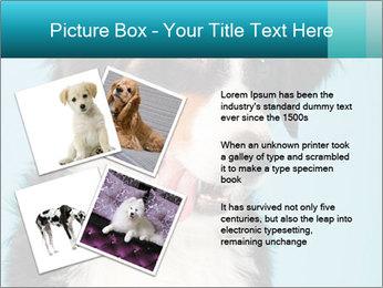 Berner sennen dog PowerPoint Template - Slide 23