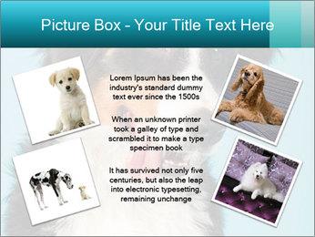 Berner sennen dog PowerPoint Template - Slide 24