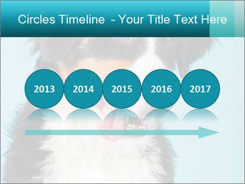 Berner sennen dog PowerPoint Template - Slide 29