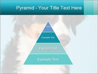 Berner sennen dog PowerPoint Template - Slide 30