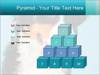 Berner sennen dog PowerPoint Template - Slide 31