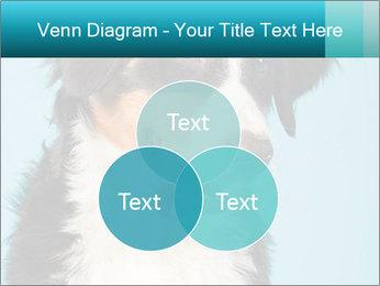 Berner sennen dog PowerPoint Template - Slide 33