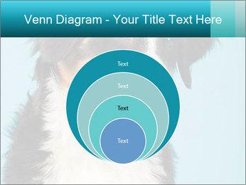 Berner sennen dog PowerPoint Template - Slide 34