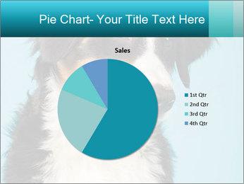 Berner sennen dog PowerPoint Template - Slide 36