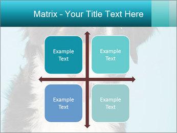 Berner sennen dog PowerPoint Template - Slide 37