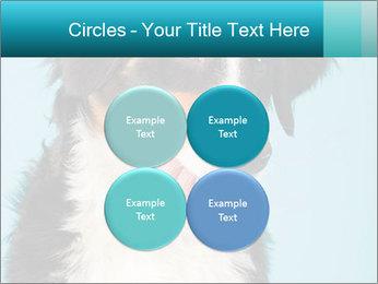 Berner sennen dog PowerPoint Template - Slide 38