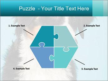 Berner sennen dog PowerPoint Template - Slide 40