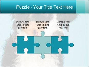 Berner sennen dog PowerPoint Template - Slide 42