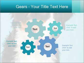 Berner sennen dog PowerPoint Template - Slide 47
