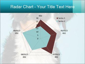 Berner sennen dog PowerPoint Template - Slide 51