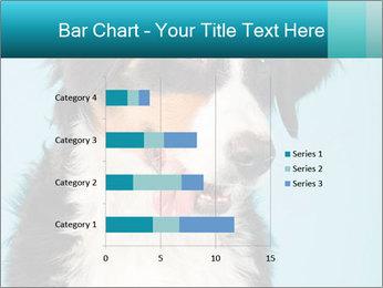 Berner sennen dog PowerPoint Template - Slide 52