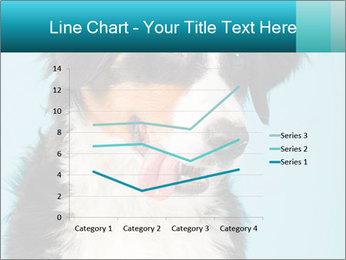 Berner sennen dog PowerPoint Template - Slide 54