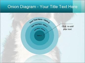 Berner sennen dog PowerPoint Template - Slide 61