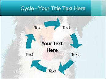 Berner sennen dog PowerPoint Template - Slide 62