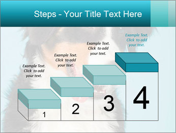 Berner sennen dog PowerPoint Template - Slide 64