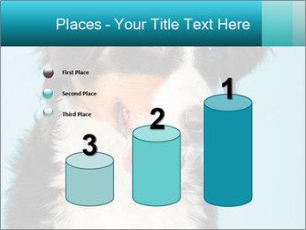 Berner sennen dog PowerPoint Template - Slide 65