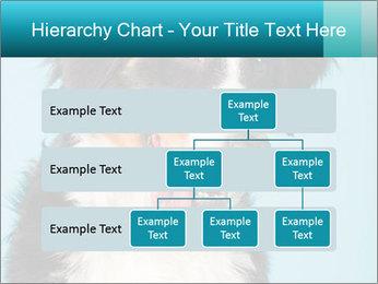 Berner sennen dog PowerPoint Template - Slide 67