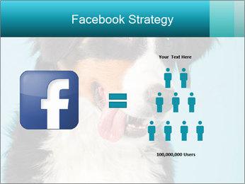 Berner sennen dog PowerPoint Template - Slide 7