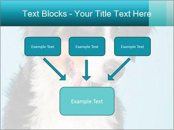 Berner sennen dog PowerPoint Template - Slide 70