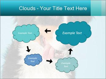 Berner sennen dog PowerPoint Template - Slide 72