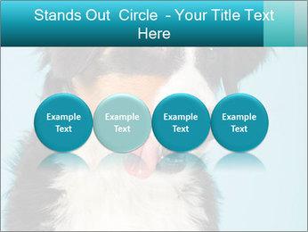 Berner sennen dog PowerPoint Template - Slide 76