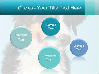 Berner sennen dog PowerPoint Template - Slide 77