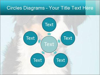 Berner sennen dog PowerPoint Template - Slide 78