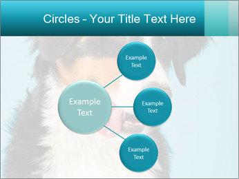 Berner sennen dog PowerPoint Template - Slide 79