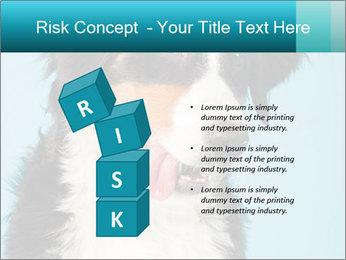 Berner sennen dog PowerPoint Template - Slide 81