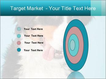 Berner sennen dog PowerPoint Template - Slide 84