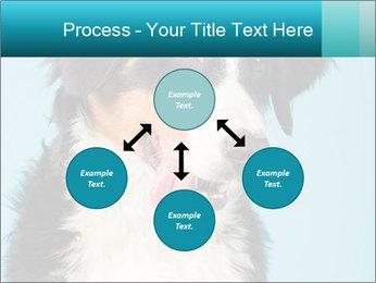 Berner sennen dog PowerPoint Template - Slide 91